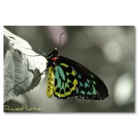 Αφίσα (γράμματα, μαύρο, λευκό, άσπρο, πεταλούδα)